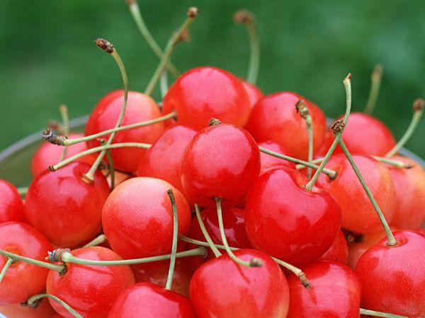 Вишня Фея описание сорта и характеристики особенности выращивания и ухода