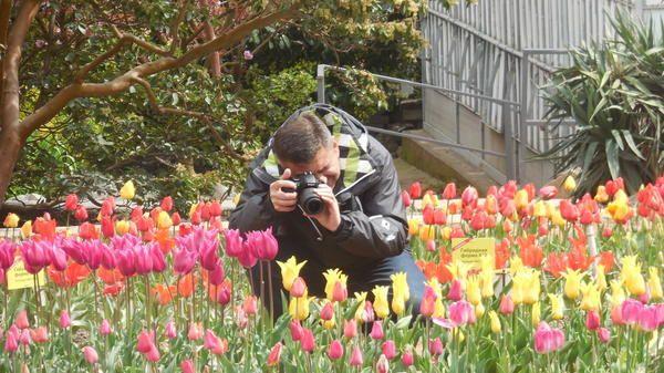 odstranite tulipani