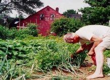 Занятие садоводством сохраняет молодость и здоровье