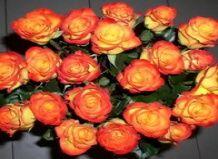 Vonj vrtnic izboljšuje spomin