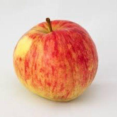 Яблоня осенняя радость описание фото отзывы